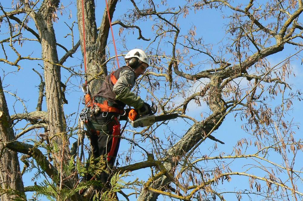 Quelques conseils concernants l'élagage des arbres